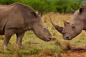 © Brent Stirton / Veolia Environnement Wildlife Photographer of the Year 2012